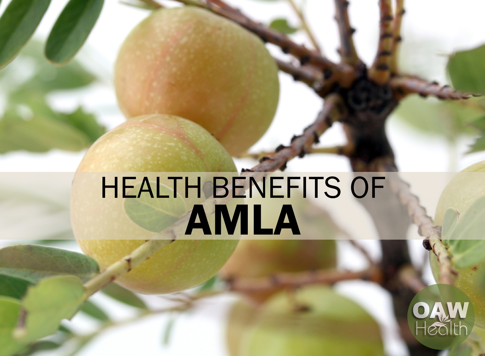 Health Benefits of Amla – Indian Gooseberry