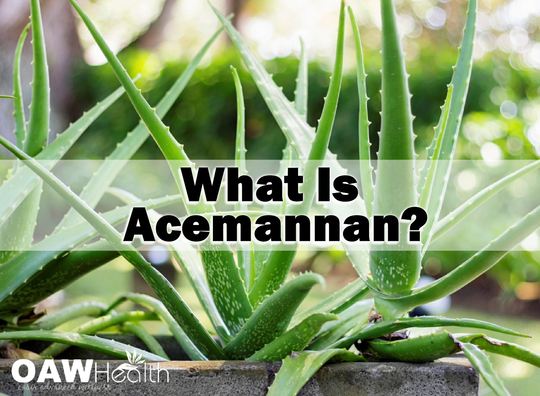 What is Acemannan?
