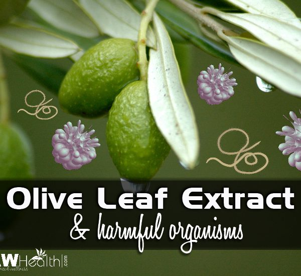 Olive Leaf Extract for Harmful Organisms