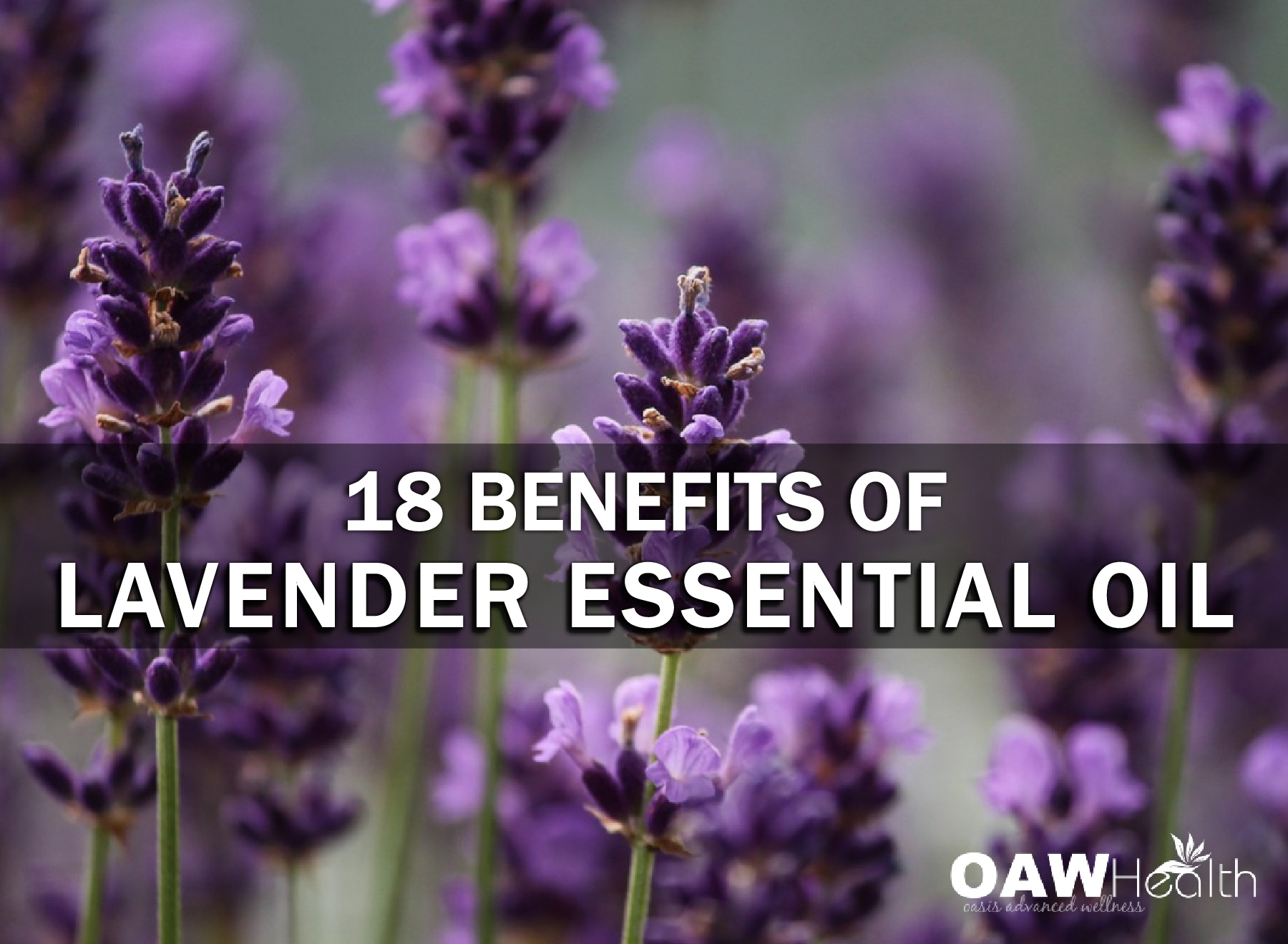 18 Benefits of Lavender Essential Oil