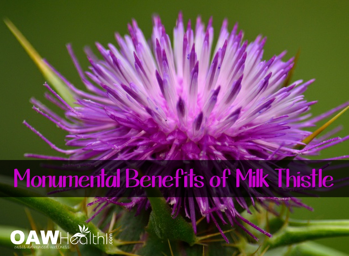 Monumental Benefits of Organic Milk Thistle Seed