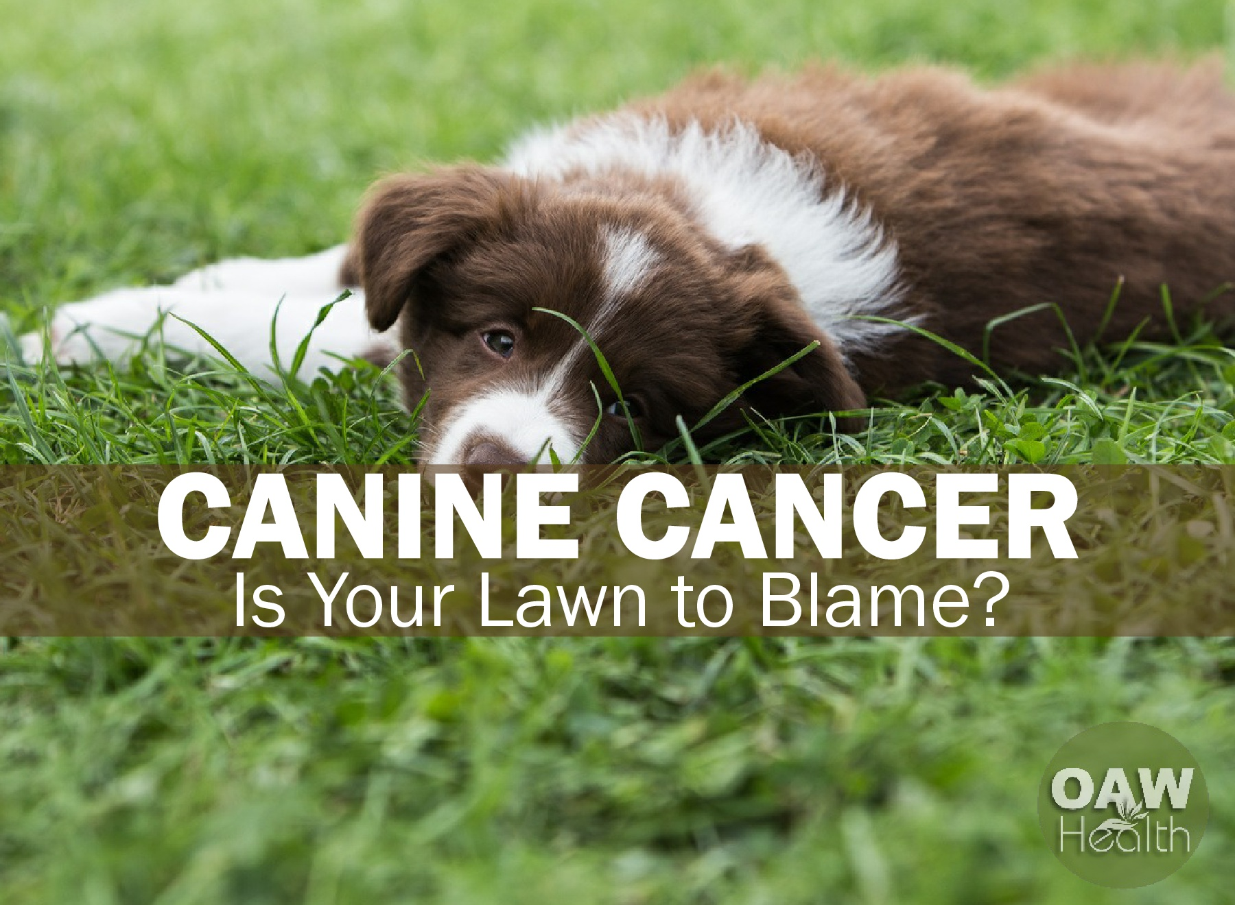 Canine Cancer: Is Your Lawn to Blame?