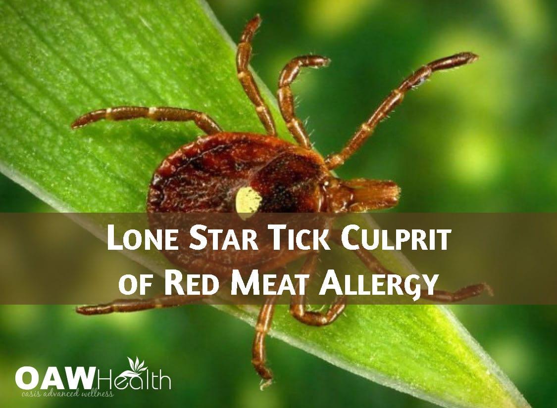Lone Star Tick Culprit of Red Meat Allergy